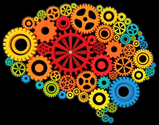 brain image 4